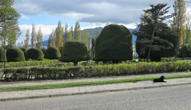 Puerto Natales shrubs