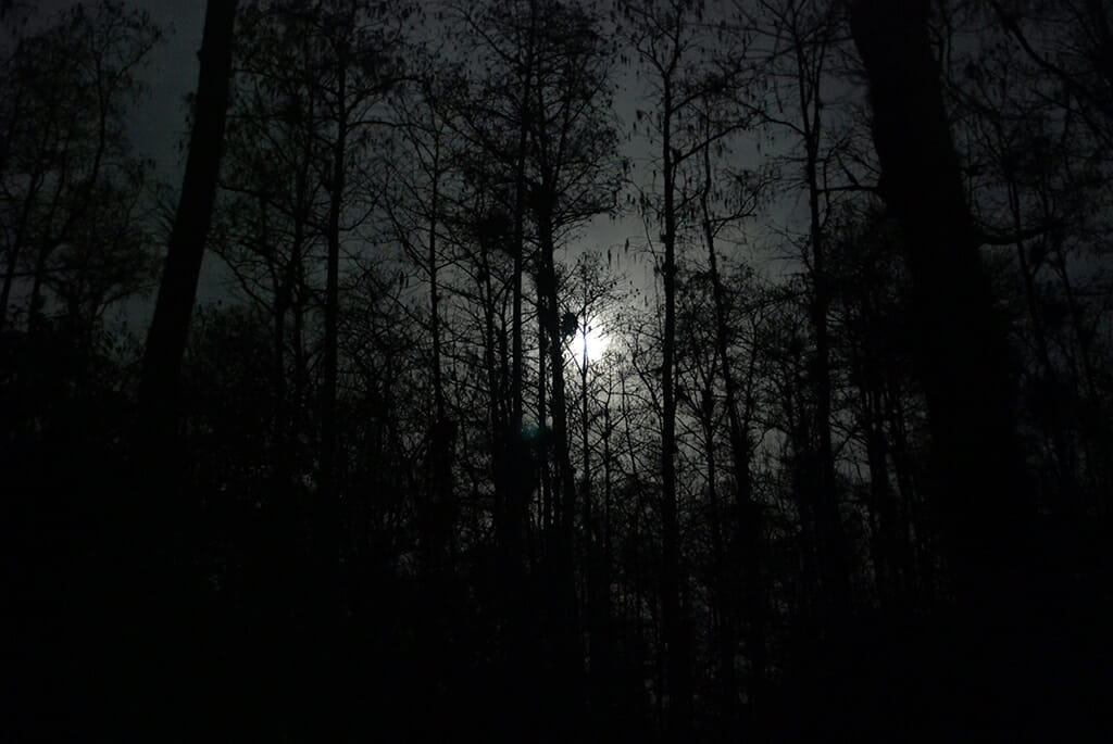 Blue moon over Big Cypress Swamp