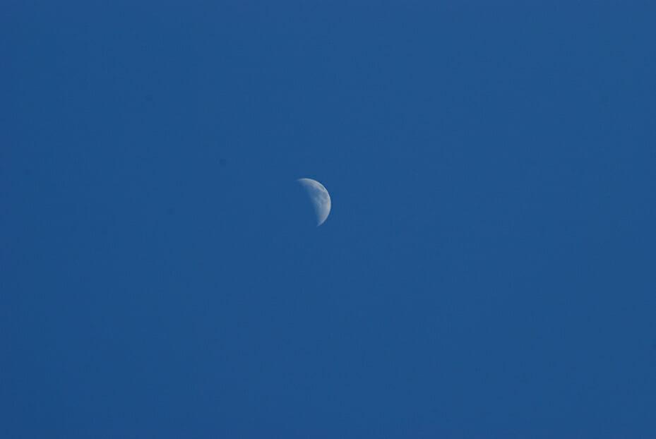 Moon from Dicerandra Scrub, Titusville
