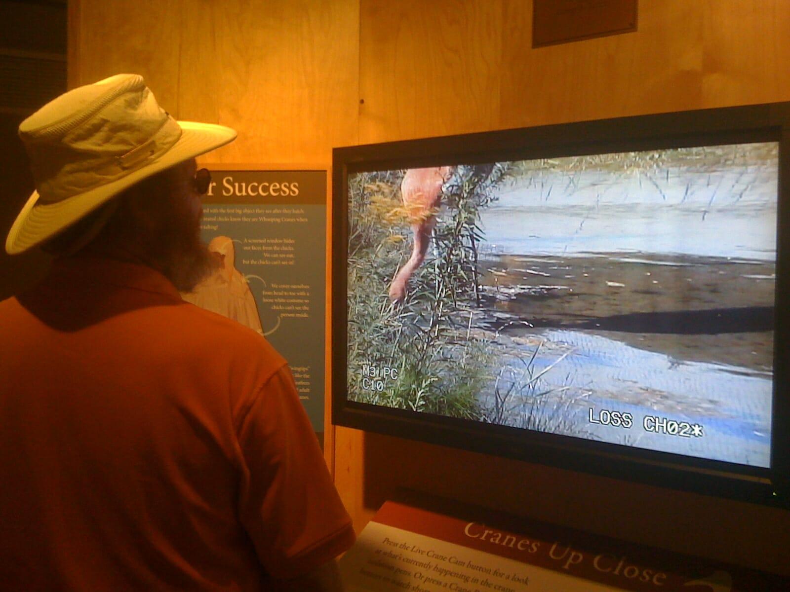 Visiting the International Crane Foundation in Baraboo, Wisconsin