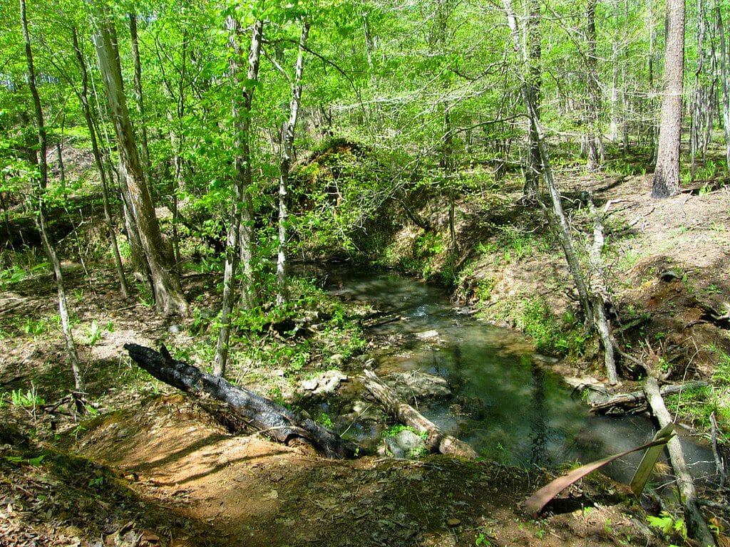 Lick Creek Sumter National Forest