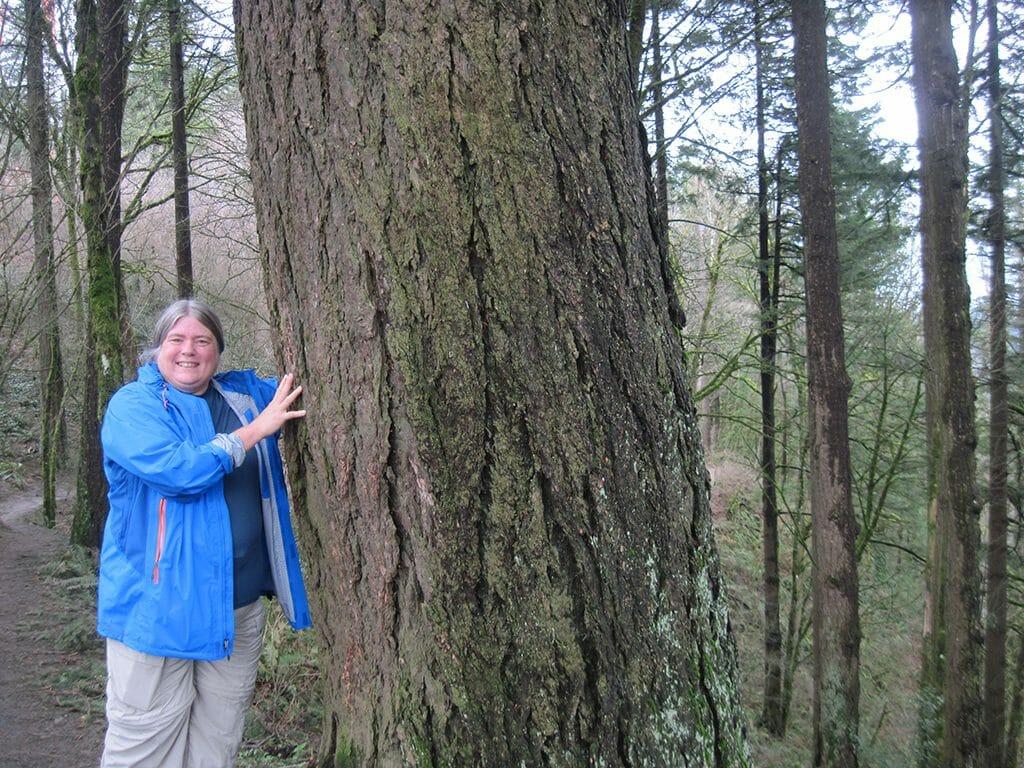 Big spruce on the Portland 4T