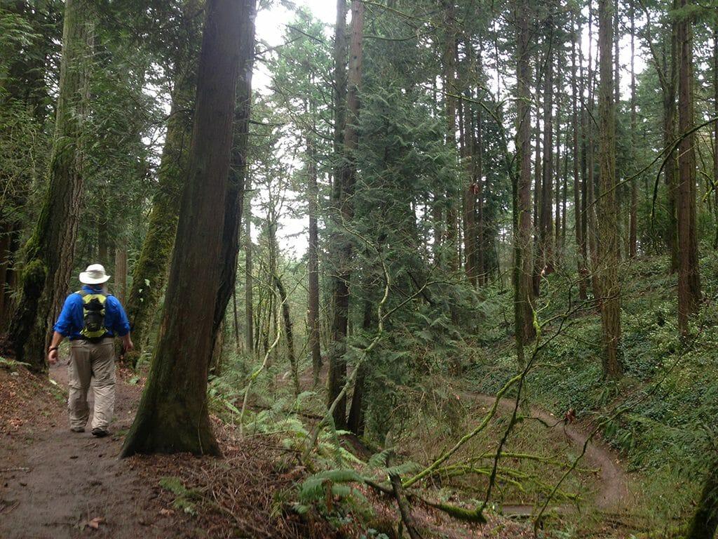 Portland 4T urban forest