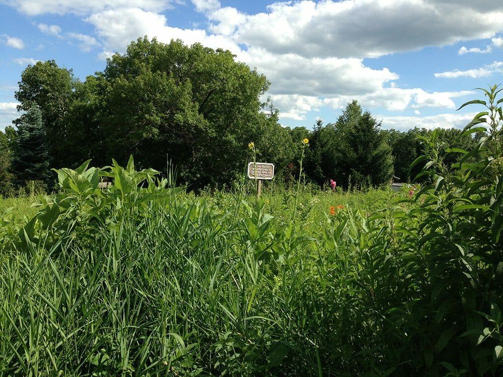 Restored tallgrass prairie at Dubuque Arboretum