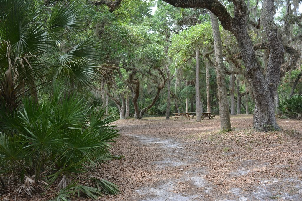 Live oak canopy at Washington Oaks