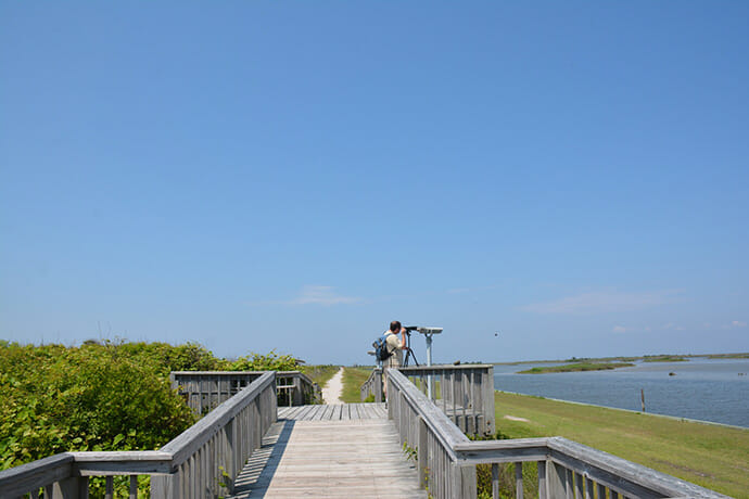 Birder at Pea Island NWR