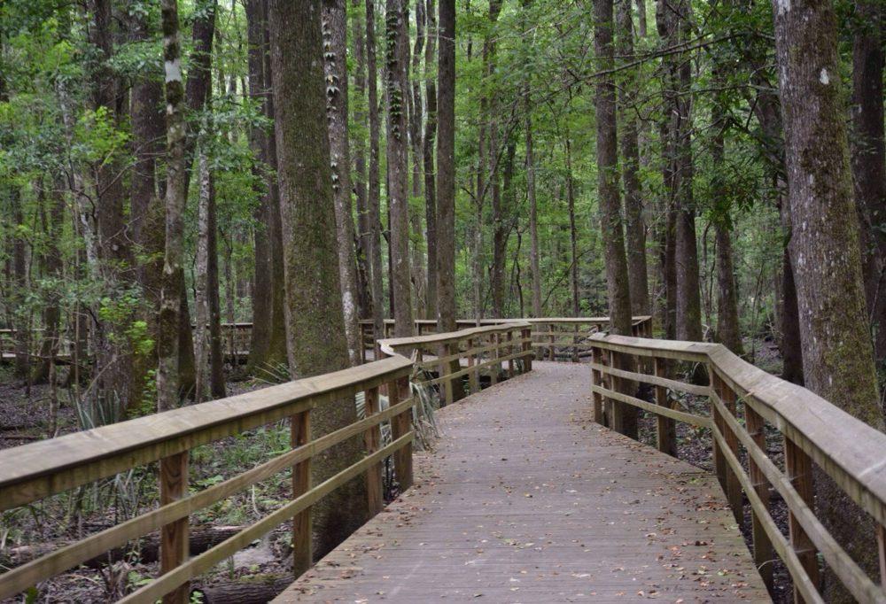 Great Swamp Sanctuary