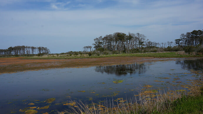 Marshes at Chincoteague NWR