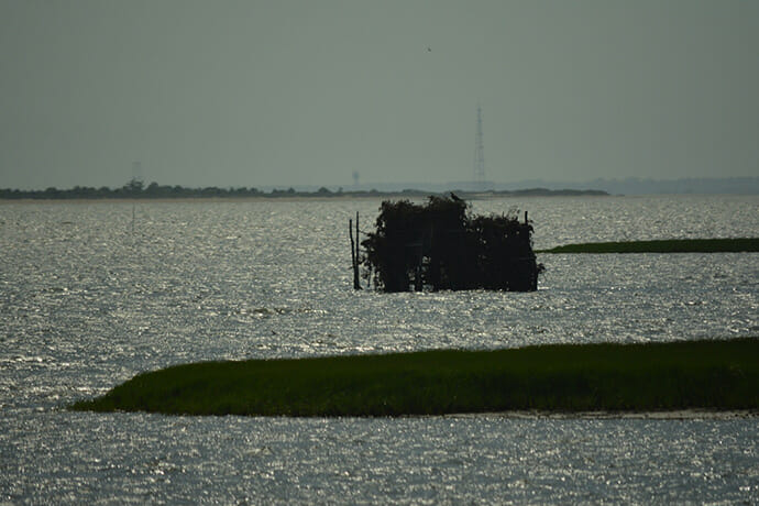 Oyster tower Wallops Island