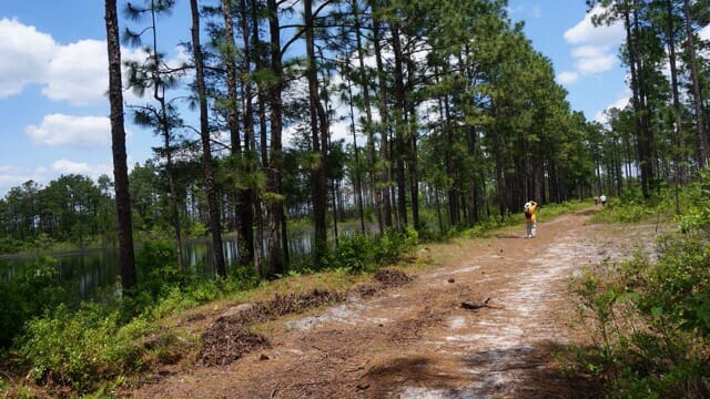Sandy hikes off into the Green Swamp