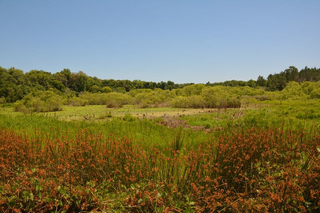 Spanish Pond