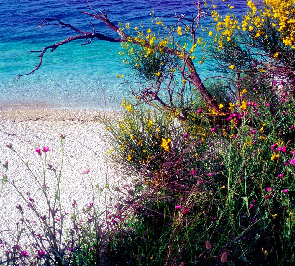 Adriatic shoreline of Corfu
