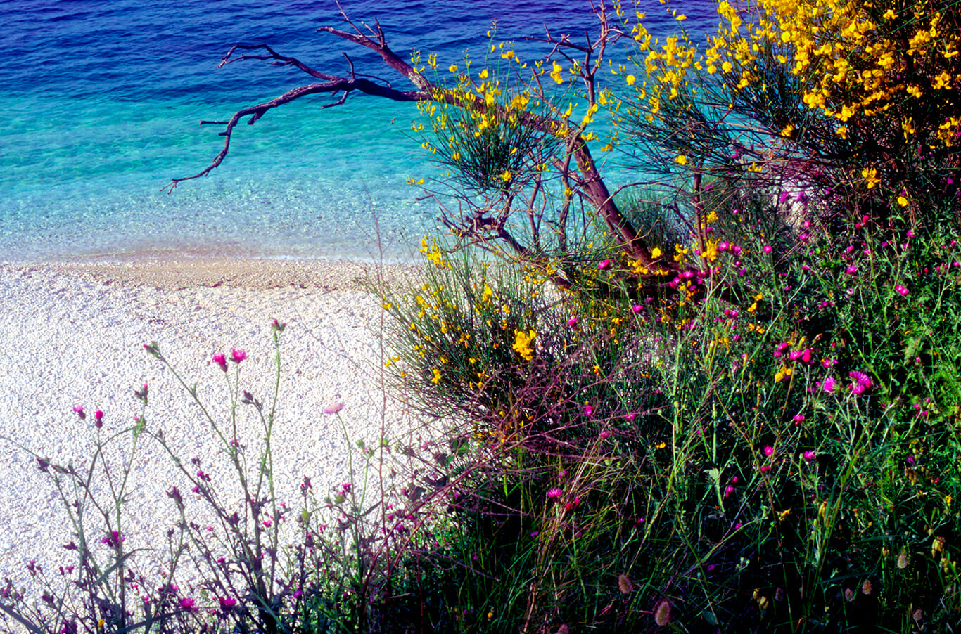 Adriatic shoreline of Corfu