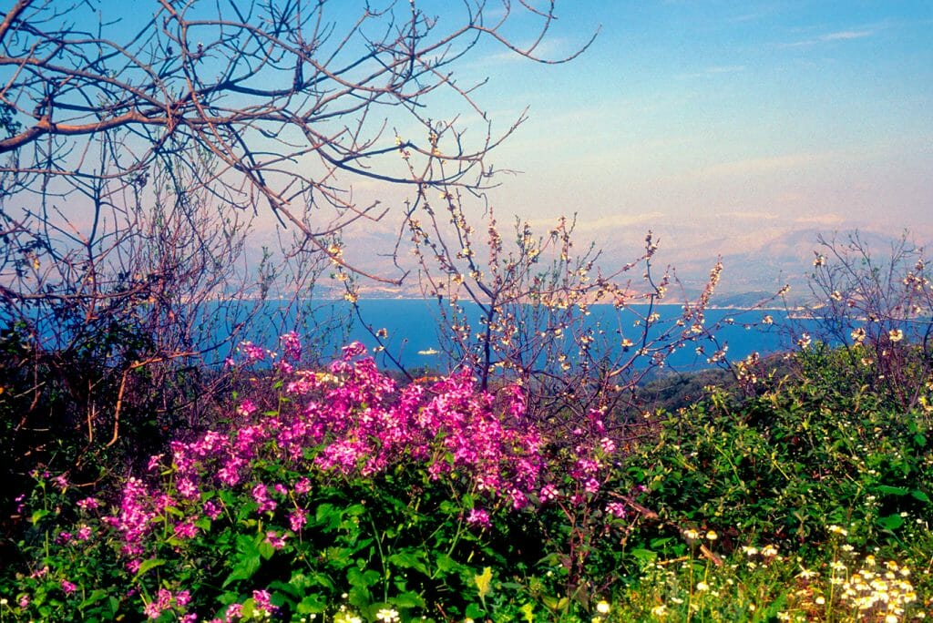 Corfu in bloom in springtime