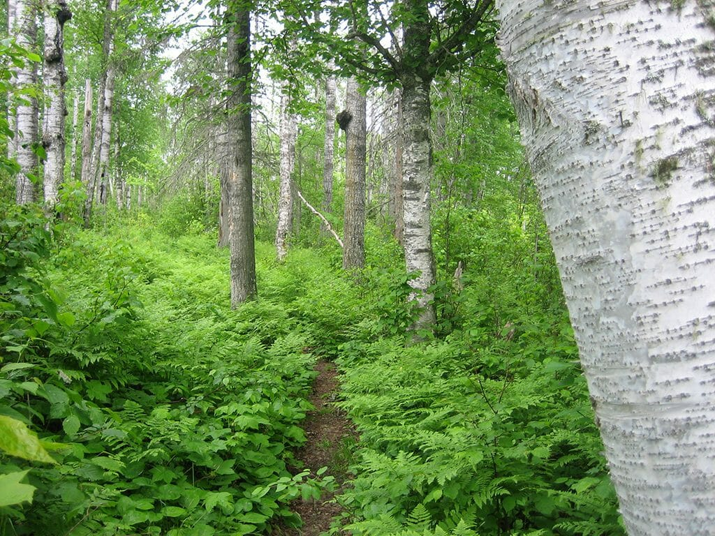 Greenstone Ridge Trail, Isle Royale National Park