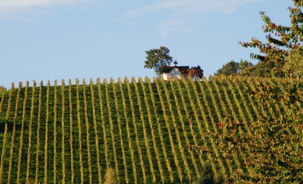Vineyard in Baden-Baden