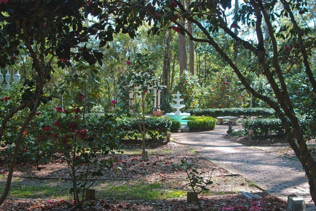 Camellia Garden at Dorothy B. Oven Park