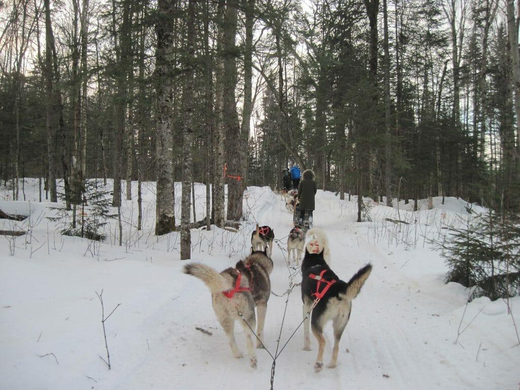 Dogsledding in the woods