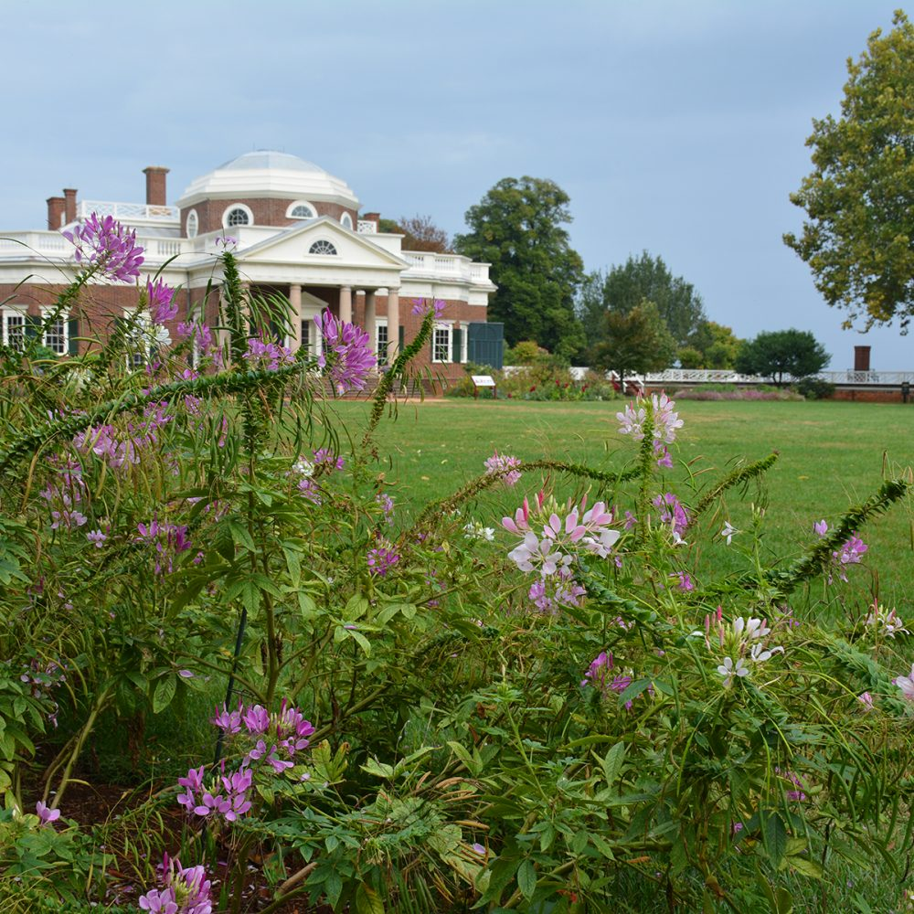 Monticello and its gardens