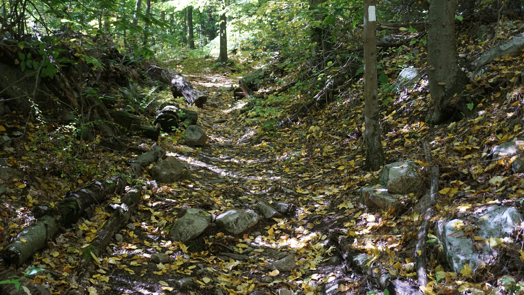 Appalachian Trail on Waywayanda Mountain