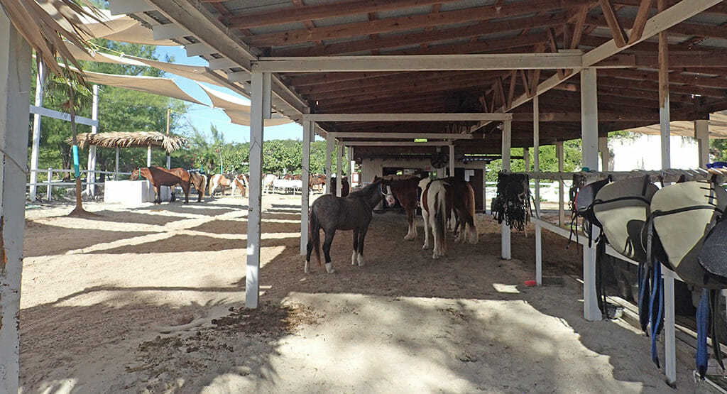 Stables on Half Moon Cay