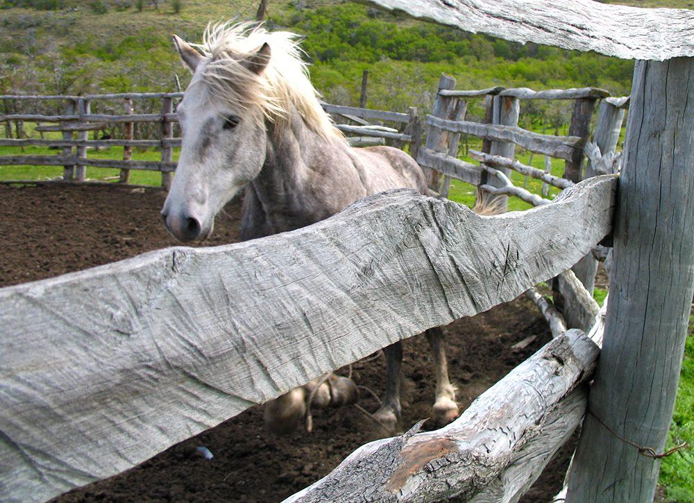 Stallion at Dos De Enero