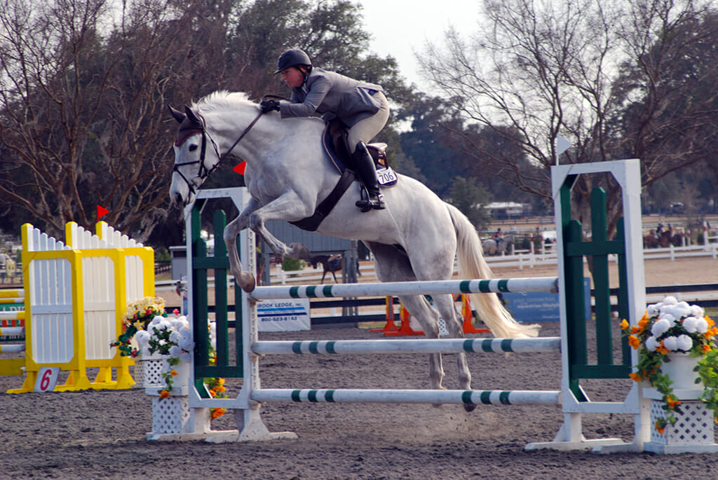 Jumper at Horses in the Sun Ocala