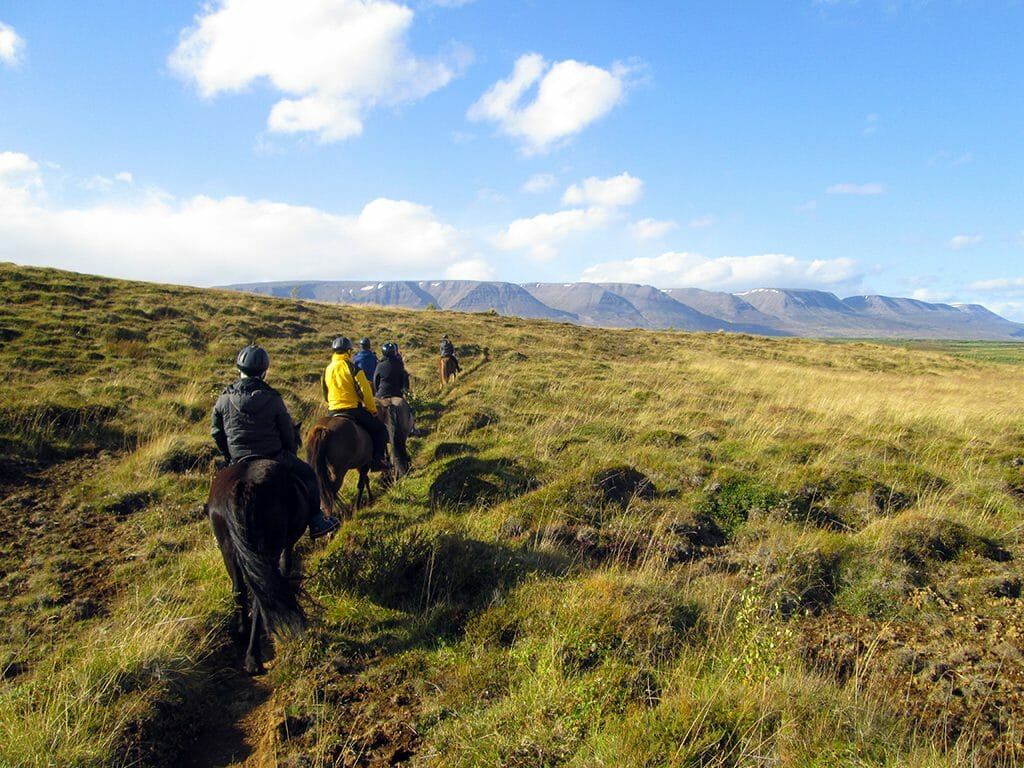 Icelandic horse ride