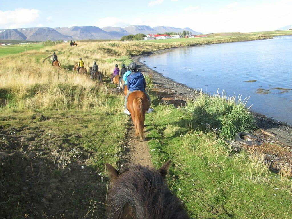 Riding Icelandic horse