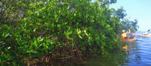 Iguana Key West Eco Tours