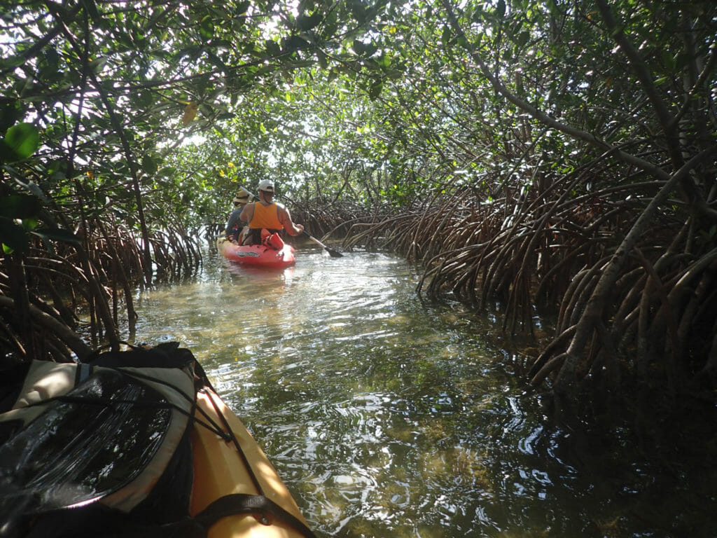 Key West Ecotours mangrove tunnel