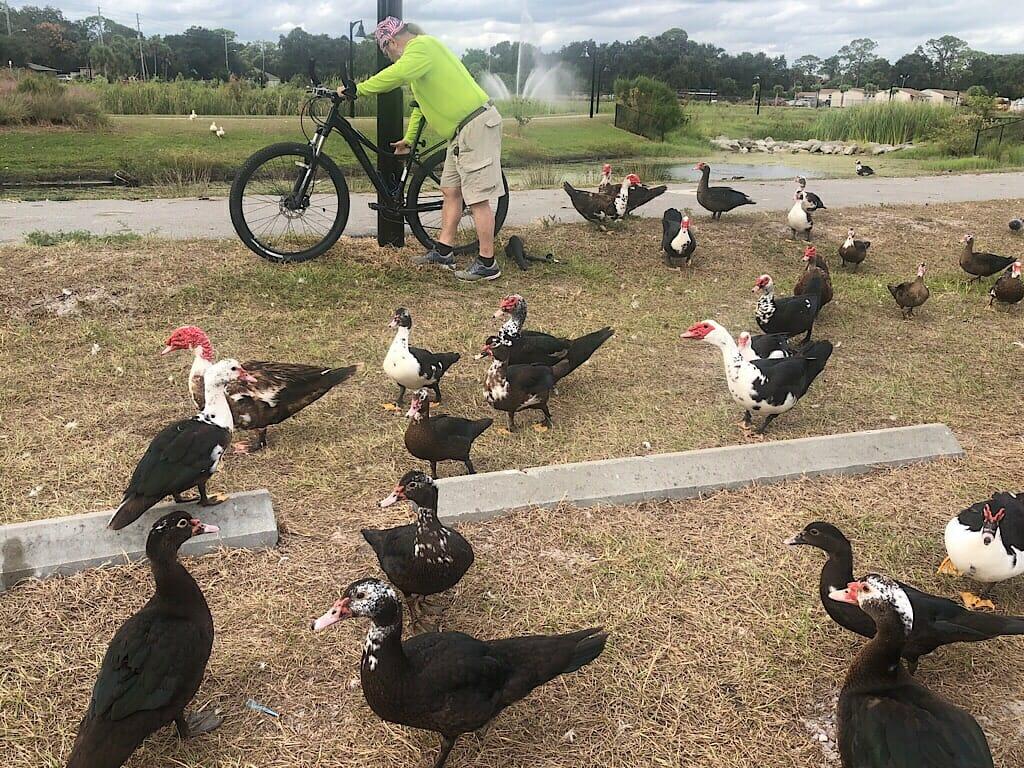 Ducks at Draa Park