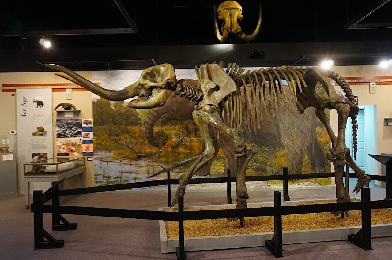Saltville mastodon