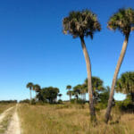 Military Road at Kissimmee Prairie