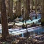 Rainbow Swamp in Osceola National Forest