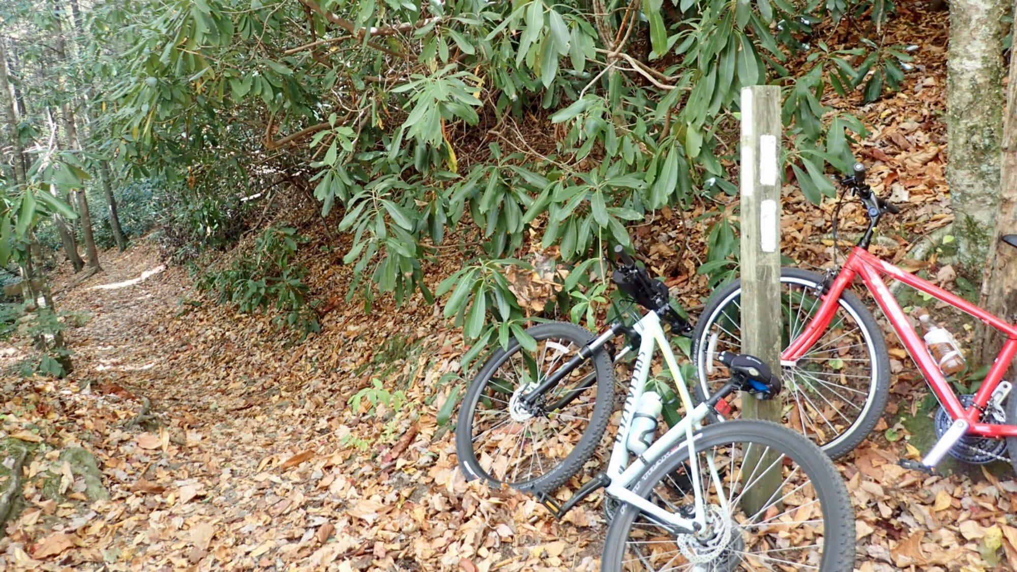 Southern Bikes & Hikes