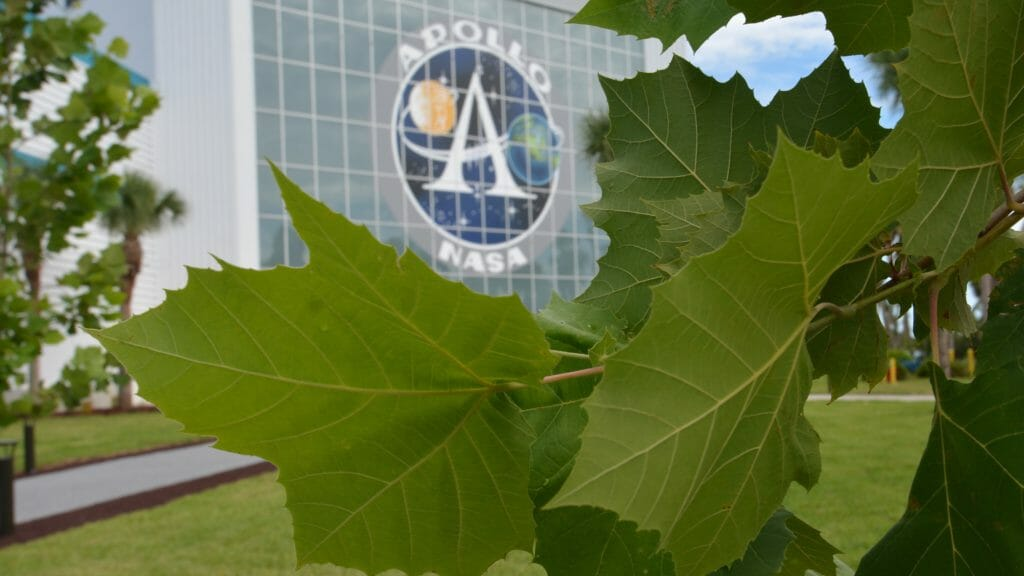 Moon Tree Garden sycamore NASA