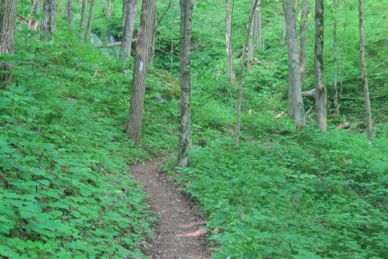 Trail leading through woods to waterfall