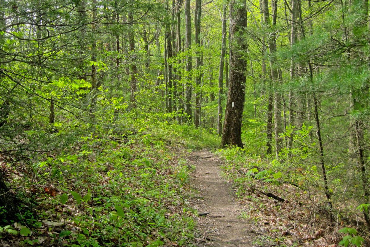 Appalachian Trail footpath