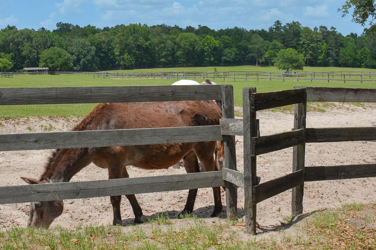 Horses behind a fence on a farm