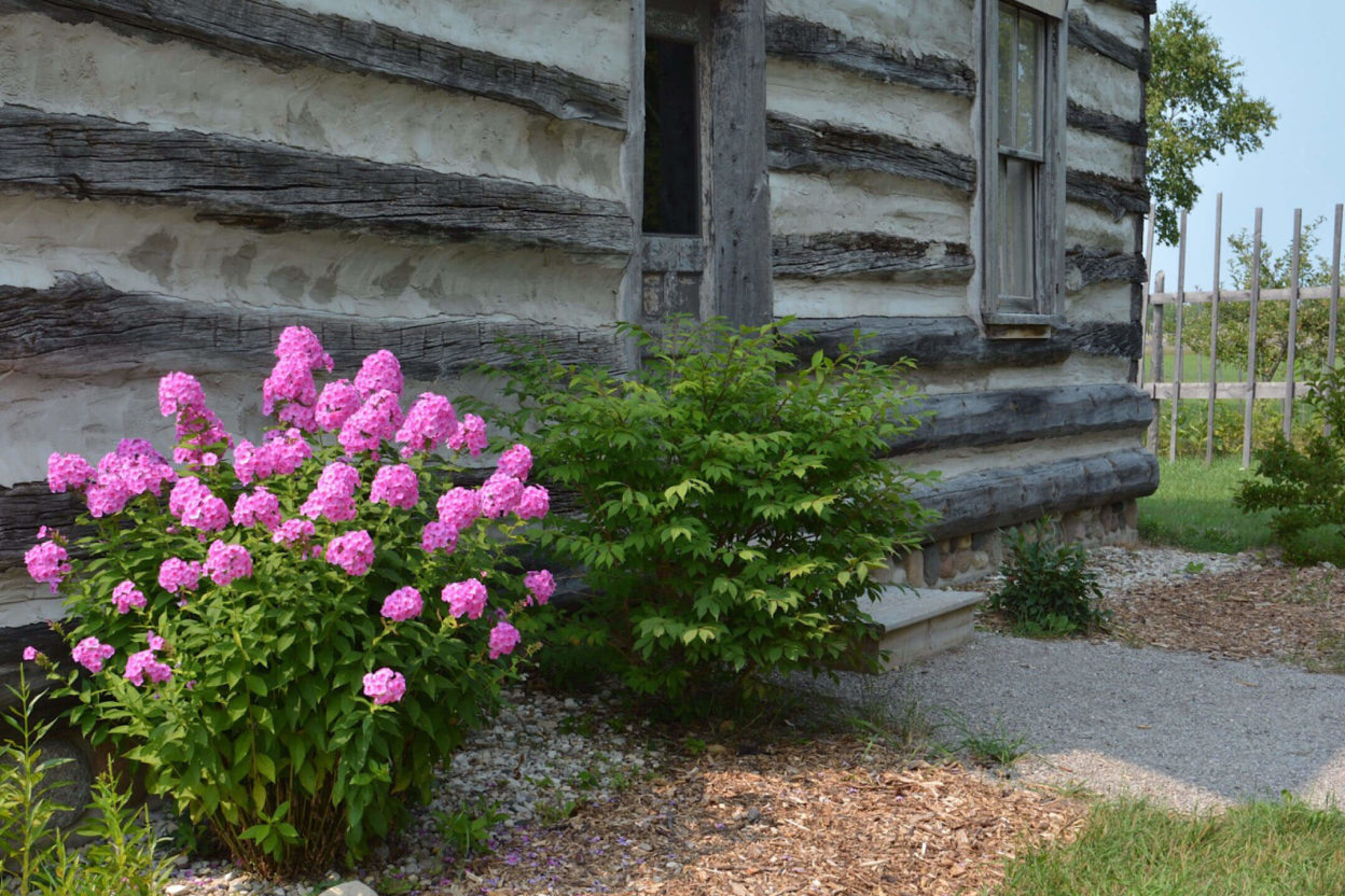 Log cabin exterior with blooming flowers