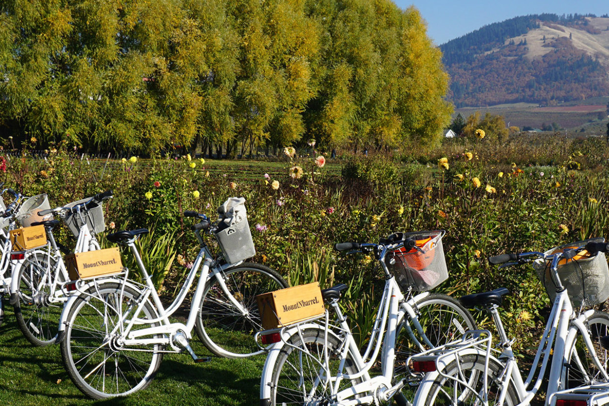 White bicycles at a winery