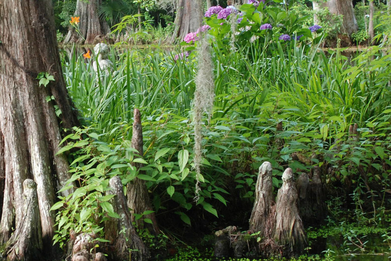 Cypress swamp with floral blooms